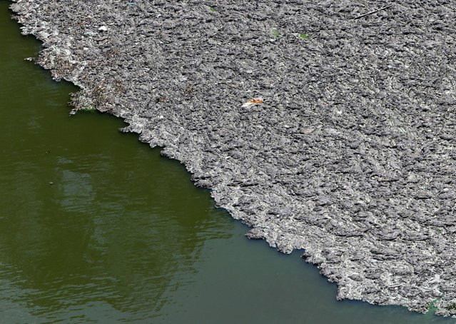 Trash floats on top of the polluted water of Billings reservoir in Sao Paulo February 12, 2015. According to local media, the Billings dam supplies 1.6 million people in the Greater ABC region of Greater Sao Paulo and the state government wants to treat the water to be adequate for human consumption, adding to the complexity of securing safe water supply during the drought. (Photo by Paulo Whitaker/Reuters)