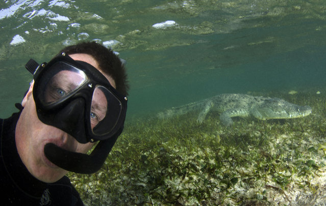 Andy taking a selfie with the crocodile at Banco Chinchorro, off southeast Mexico. (Photo by Caters News Agency)