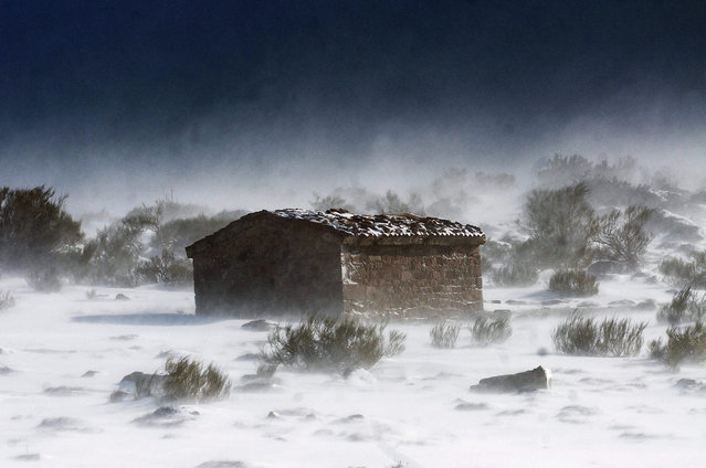 A lonely stable stands in the middle of a snow-covered meadow in the small town of Branavieja, in the province of Cantabria, northern Spain, 15 January 2016. (Photo by Pedro Puente Hoyos/EPA)