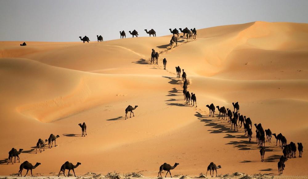 Mazayin Dhafra Camel Festival