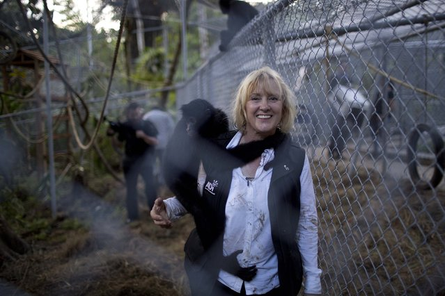In this April 18, 2015 photo, Jan Creamer, president of Animal Defenders International, poses for a photo while holding a monkey, inside the British charity's jungle sanctuary, in the Pilpintuwasi rainforest, near Iquitos. Creamer who organized the Saturday airlift and rehoming of more than three dozen mammals rescued from circuses and animal traffickers, said the sanctuary would be their permanent home. (Photo by Rodrigo Abd/AP Photo)