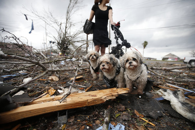 A woman holds thre dogs by a make shift leash amongst the debris left behind by a tornadon on February 7, 2017 in New Orleans, Louisiana. (Photo by Sean Gardner/Getty Images)