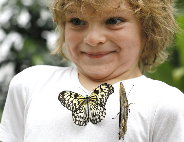 Adam Sharif smiles as butterflies land on his shirt during a photo call for hundreds of tropical butterflies being released, to launch the Natural History Museum's Sensational Butterflies exhibition in London, Wednesday, March 23, 2016. The exhibition opens to the public on March 24 and runs until Sept. 11. (Photo by Kirsty Wigglesworth/AP Photo)
