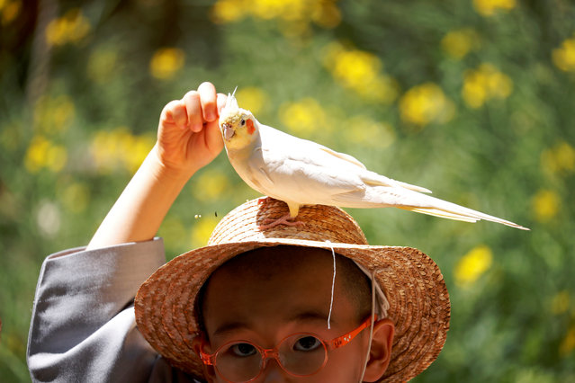 A boy who is experiencing the life of a Buddhist monk by staying in a temple for two weeks as a novice monk, feeds a bird as it sits on his hat at Everland amusement park in Yongin, South Korea, May 2, 2019. (Photo by Kim Hong-Ji/Reuters)