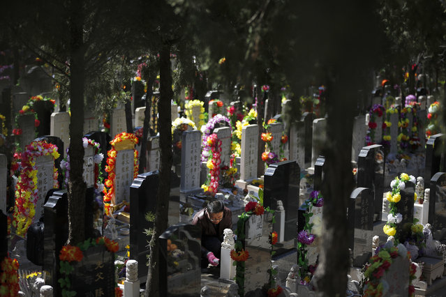 A man cleans a tomb of his deceased relatives at the Babaoshan cemetery on the Qingming Festival in Beijing, Sunday, April 3, 2016. Qingming festival, also known as the Grave Sweeping Day, is a day when Chinese around the world remember their dearly departed and take time off to clean up the tombs and place flowers and offerings. (Photo by Andy Wong/AP Photo)