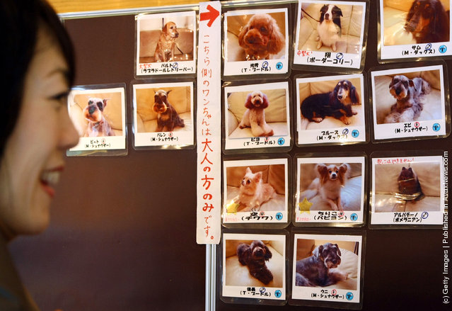 Rent-A-Dog In Japan