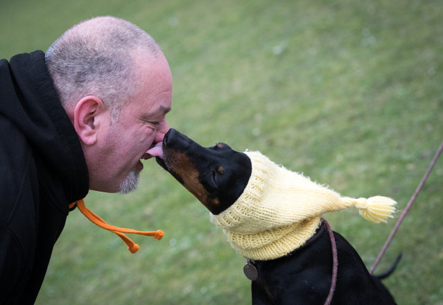 A Manchester terrier wears a hat as she arrives on the second day of Crufts Dog Show at the NEC Arena on March 10, 2017 in Birmingham, England. (Photo by Matt Cardy/Getty Images)