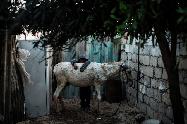 A Palestinian boy plays with a donkey outside their makeshift home in the Khan Yunis refugee camp in the southern Gaza Strip on April 19, 2017. The Gaza Strip' s only functioning power plant was out of action earlier in the week after running out of fuel, the head of the territory' s electricity provider told AFP. (Photo by Mahmud Hams/AFP Photo)