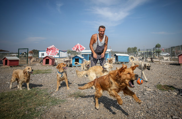 Emre Demir, plays with dogs at an animal house in Bursa, Turkey on September 26, 2019. Emre Demir takes care of more than 300 abandoned dogs and ones in need of care at the animal house, built with donations. (Photo by Sergen Sezgin/Anadolu Agency via Getty Images)
