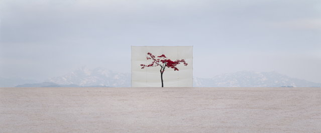 The Lonely Tree By  Myoung Ho Lee