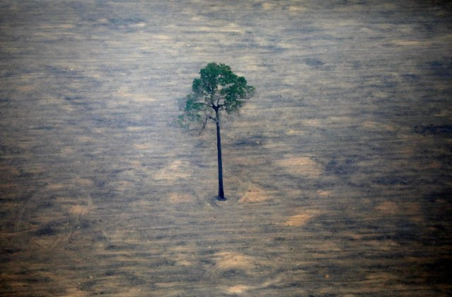 An aerial view shows a deforested plot of the Amazon near Porto Velho, Rondonia State, Brazil, September 17, 2019. (Photo by Bruno Kelly/Reuters)
