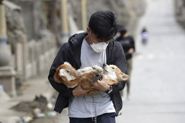 An animal volunteer carries a dog he rescued from deserted homes near Taal volcano as residents evacuated to safer grounds leaving some of their pets behind in Talisay, Batangas province, southern Philippines on Wednesday January15, 2020. Taal volcano is spewing lava into the sky and trembled constantly, possibly portending a bigger and more dangerous eruption, as tens of thousands of people fled villages darkened and blanketed by heavy ash. (Photo by Aaron Favila/AP Photo)