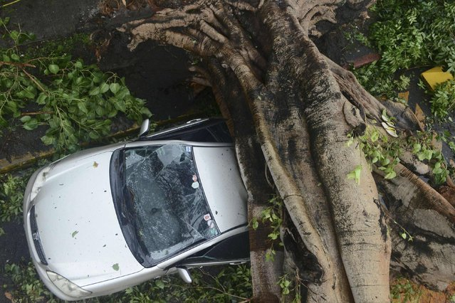 A huge tree crushes a car during the onslaught of Typhoon Rammasun, (locally named Glenda) that hit Makati city in Manila July 16, 2014. The typhoon killed at least 10 people as it churned across the Philippines and shut down the capital, cutting power and prompting the evacuation of almost more than 370,000 people, rescue officials said on Wednesday. (Photo by Mark DeMayo/Reuters)
