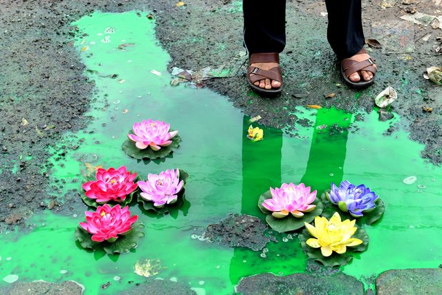 An Indian bystander looks at an art installation created by artist Baadal Nanjundaswamy by placing artificial lotus flowers over a pothole filled with sewage at a pedestrian junction on Old Airport Road in Bangalore on August 20, 2015. Baadal is known for his civic-sensitive art installations in Bangalore and Mysore which have drawn public attention and cause indirect embarrassment to local authorites. (Photo by Manjunath Kiran/AFP Photo)