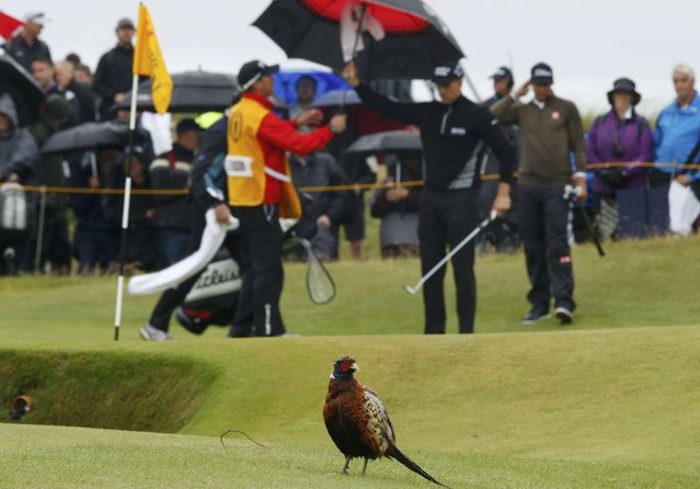 Golf, British Open, A pheasant stands by the 14th green as Sweden's Henrik Stenson and Australia's Adam Scott look on during the second round, Royal Troon, Scotland, Britain on July 15, 2016. (Photo by Paul Childs/Reuters)