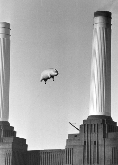 """A 40-foot long inflatable pig suspended between two of the chimneys at Battersea Power Station, London, during a photoshoot for the cover of Pink Floyd's album """"Animals"""", 6th November 1976. (Photo by Keystone)"""