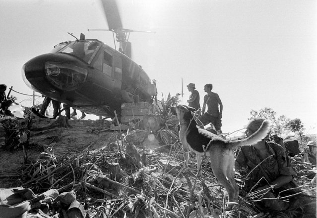 A U.S. helicopter lands at a hilltop position to take the 5th Mechanized Division, including scout dog and his handler at right, out of the firebase located 15 miles below South Vietnam's demilitarized zone during the Vietnam War, September 27, 1970. (Photo by Henri Huet/AP Photo)