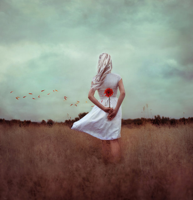"""never let the flower decide"". (Kindra Nikole)"