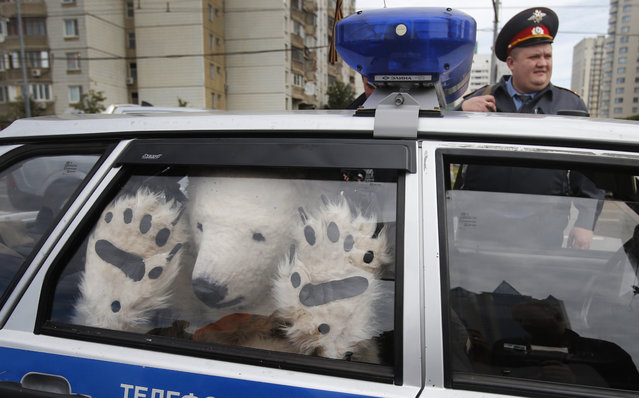 A Greenpeace activist, dressed as a polar bear, sits inside a police car after being detained outside Gazprom's headquarters in Moscow, Russia, September 5, 2012. Russian and international environmentalists are protesting against Gazprom's plans to pioneer oil drilling in the Arctic. (Photo by Misha Japaridze/AP Photo)