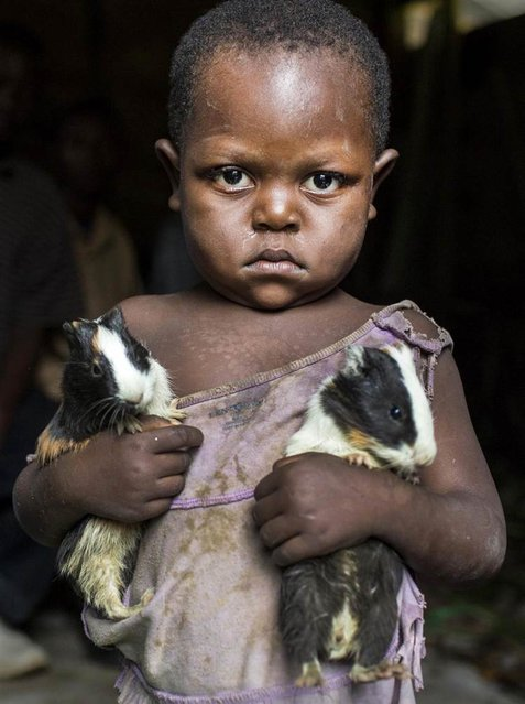 A girl carries two guinea pigs she was given during a distribution of the animals to her community as part of a food security program of Action Against Hunger International (ACF) in Karete, Democratic Republic of Congo, on February 19, 2013. More than 500 guinea pigs were distributed to the locals by the non-profit organization that focuses mainly on nutrition and hunger prevention. (Photo by Jana Asenbrennerova/Reuters)