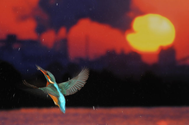 """Winner of the Changing Climates prize: Jose Luis Rodriguez for """"Flight for Life"""". Rodriguez's image captures a kingfisher in mid-flight, in the shadow of the severe pollution caused by the factories in the background. (Photo by Jose Luis Rodriguez/2017 Ciwem environmental photographer of the year)"""