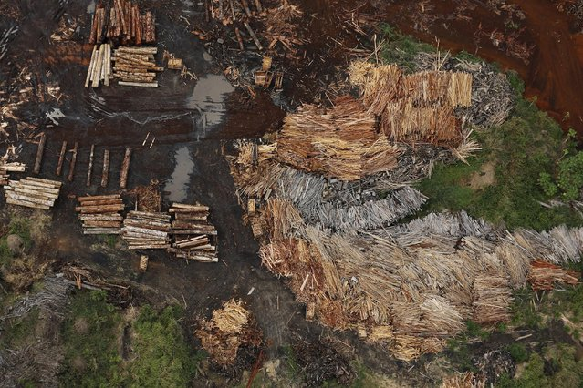 Sawmills that process illegally logged trees from the Amazon rainforest are seen near Rio Pardo, in the district of Porto Velho, Rondonia State, Brazil, September 3, 2015. (Photo by Nacho Doce/Reuters)