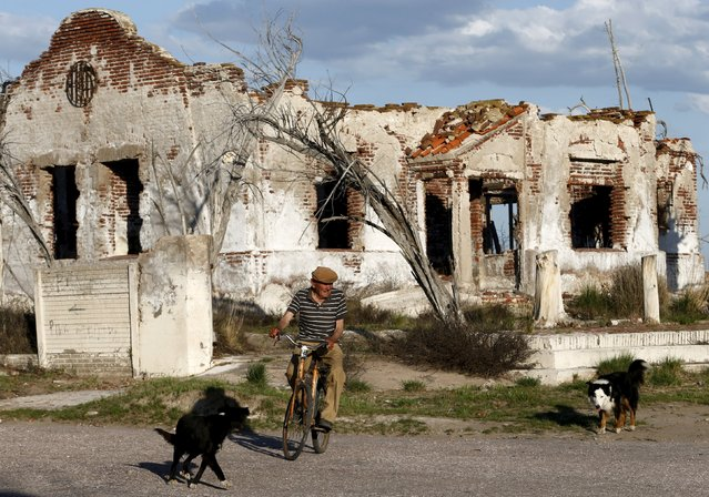 Lone inhabitant Pablo Novak, aged 85, rides his bike by a ruined house in the Epecuen Village, November 6, 2015. (Photo by Enrique Marcarian/Reuters)