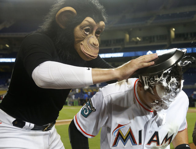 Wearing a monkey mask, Miami Marlins' Miguel Rojas hits Martin Prado with a shaving-cream pie as Prado is interviewed after a baseball game Tuesday, May 15, 2018, in Miami. The Marlins defeated the Los Angeles Dodgers 4-2. (Photo by Wilfredo Lee/AP Photo)