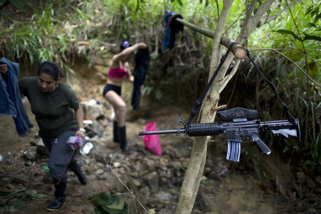 "In this January 4, 2016 photo, the weapon of a rebel fighter for the 36th Front of the Revolutionary Armed Forces of Colombia, or FARC, hangs from a branch serving as a makeshift clothesline, near a rebel camp, in Antioquia state, in the northwest Andes of Colombia. ""We'll lay aside our weapons, like the accord says, but never hand them over"", says Juan Pablo, a commander of the 36th Front. (Photo by Rodrigo Abd/AP Photo)"