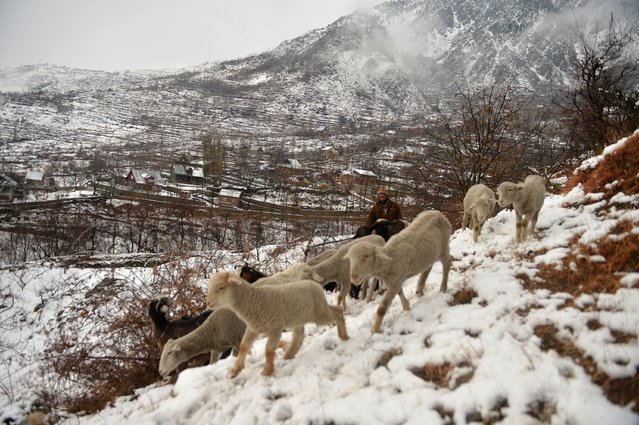 A shepherd tends to his flock after a snowfall on the outskirts of Srinagar on January 5, 2017. (Photo by Tauseef Mustafa/AFP Photo)