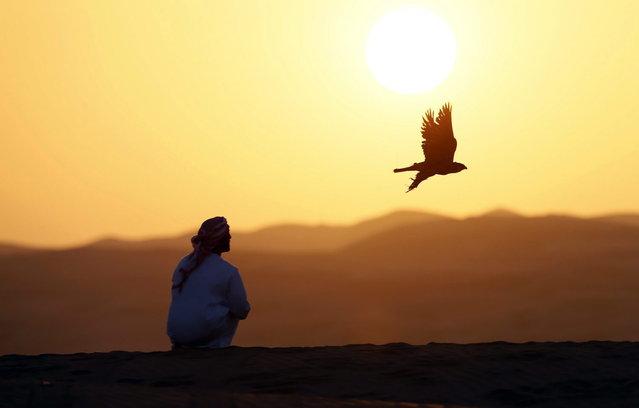 Emirati Mohammed Rakan Bin Harwon Al-Qubassiy looks on as his falcon flies at the Liwa desert, 220 kms west of Abu Dhabi, on the sidelines of the Mazayin Dhafra Camel Festival on December 21, 2013. (Photo by Karim Sahib/AFP Photo)