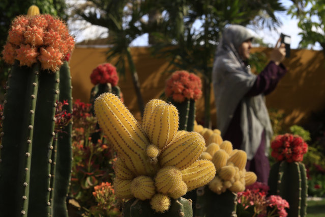 An Egyptian woman uses her mobile phone to take a picture of her friends at the Orman Garden in Giza, Egypt, Sunday, April 12, 2015. (Photo by Hassan Ammar/AP Photo)