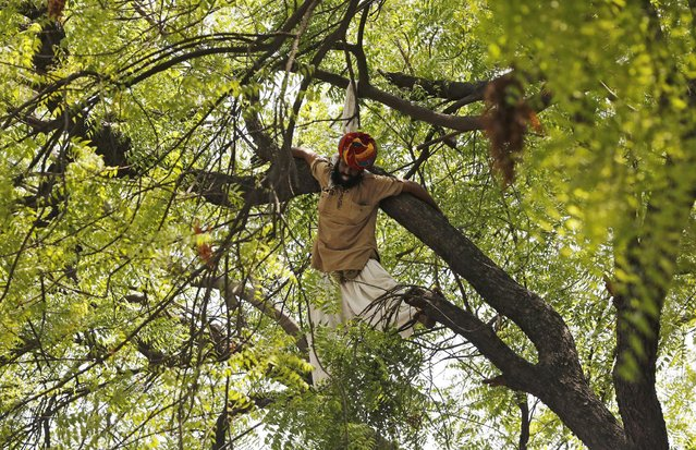 A farmer is seen hanging from a tree during a rally organized by Aam Aadmi (Common Man) Party (AAP) in New Delhi April 22, 2015. The farmer hanged himself from a tree during a political rally in New Delhi on Wednesday, in what appeared to be a desperate protest against the hardship felt by many people scratching a living in rural India. (Photo by Adnan Abidi/Reuters)