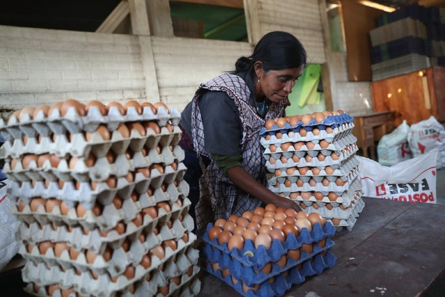 Cooperative farmer Luisa Huinel collects eggs on February 11, 2017 in the western highlands town of Cajola, Guatemala. Some 70 percent of the men in the town have left to work as undocumented immigrants in the United States, many of them leaving behind their families. (Photo by John Moore/Getty Images)