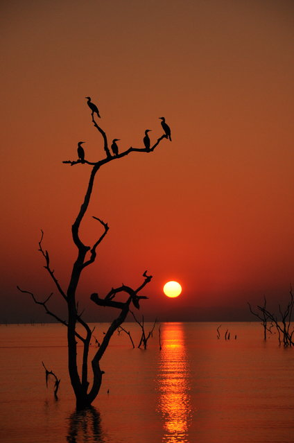 """Tranquility"". Such a simple, quiet moment captured in the right place at the right time; pure beauty. Photo location: Lake Kariba, Zimbabwe, Africa. (Photo and caption by Sara Zainer/National Geographic Photo Contest)"