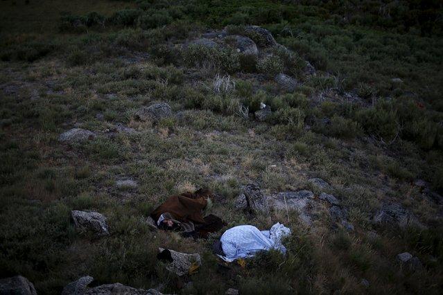 Shepherds sleep outside as they herd their flock to summer pastures in Serra da Estrela, near Seia, Portugal June 28, 2015. (Photo by Rafael Marchante/Reuters)