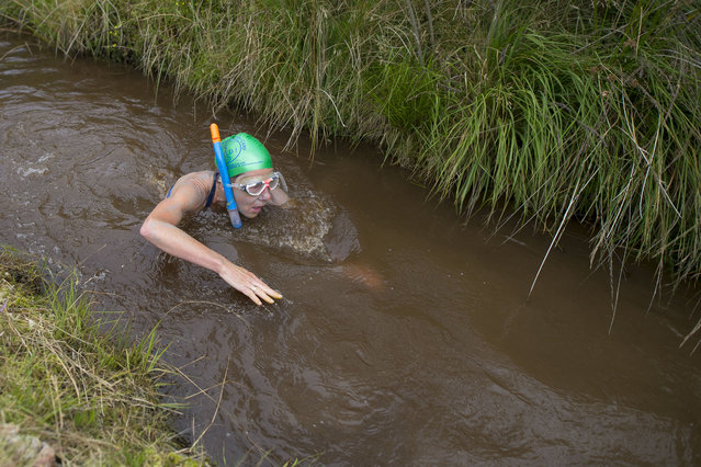 Angela Jones swims  during the World Bog Snorkelling Championships 2017 on August 27, 2017 in Llanwrtyd Wells, Wales. The competition draws competitors from all over the world and is now in its 32nd year. (Photo by Matthew Horwood/Getty Images)