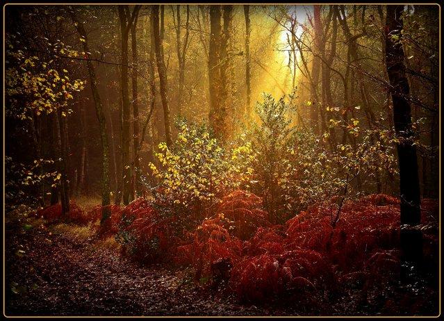 Samstagmorgen – Autumn lights