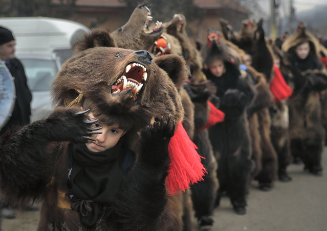 In this Saturday, December 30, 2017, picture Tudor Huluta, an 8-year-old, who returned from Britain to attend the parade, wears a bear fur costume while dancing in Asau, Romania. (Photo by Vadim Ghirda/AP Photo)