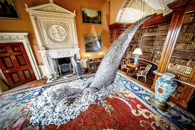 """Harewood House collections manager Paula Martin takes a photograph of """"Discharge"""", a sculpture made from 10,000 pigeon feathers by artist Kate MccGwire, in the Main Library at Harewood House in Leeds on August 5, 2020, that forms part of previously unseen exhibition """"Menagerie"""", after the house at Harewood reopened to the public following the easing of lockdown restrictions in England. (Photo by Danny Lawson/PA Images via Getty Images)"""