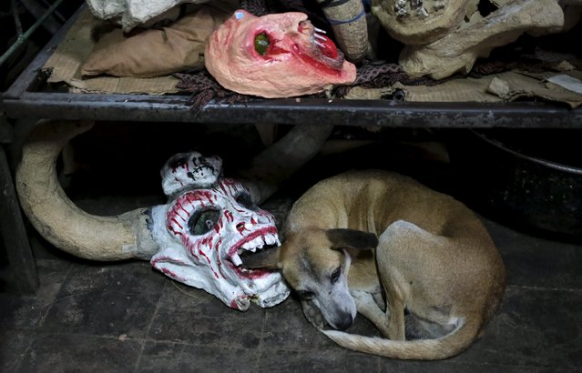 A dog takes a break near a devil mask that is used in the Los Aguizotes festival in the indigenous community of Monimbo in Masaya, Nicaragua, October 16, 2015. (Photo by Oswaldo Rivas/Reuters)