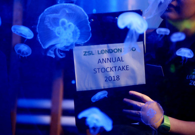 Jellyfish are counted during the Annual Stocktake at ZSL London Zoo in London, Britain February 7, 2018. (Photo by Tom Jacobs/Reuters)