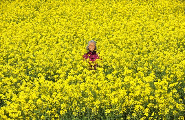 Elderly Jiangsu farmer in her field of rapeseed. (Photo by Tom Carter/The Atlantic)
