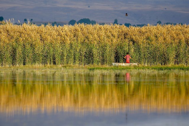 A man travels by boat near reeds on the wetlands of Lake Van in Kosk neighbourhood in Edremit district of Turkey's eastern Van province on October 04, 2020. Shallow and mirror like coastal waters of Lake Van reflect the spectacular views of nature, providing a relaxing environment away from city noise. (Photo by Ozkan Bilgin/Anadolu Agency via Getty Images)