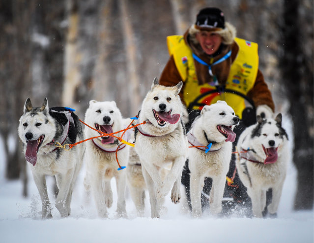 A 10 km prologue dog sled race on the eve of the 2018 Beringia dog sled race in Russia' s Far East; the prologue race is part of the 2018 Russian Winter Dog Powered Sports Cup in Petropavlovsk-Kamchatsky, Russia on March 4, 2018. (Photo by Yuri Smityuk/TASS)