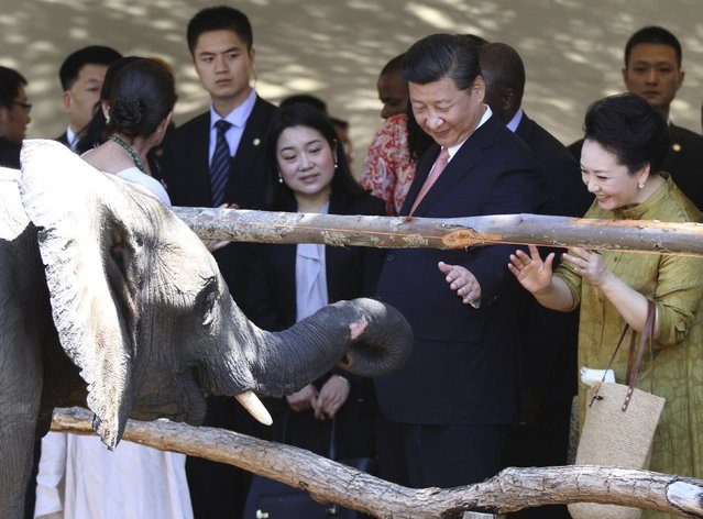 Chinese President Xi Jinping and his wife Peng Liyuan (R) watch an elephant during their visit to a private wildlife sanctuary in Harare, December 2, 2015. (Photo by Philimon Bulawayo/Reuters)