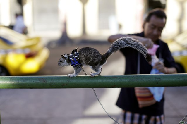 "Carlos Melendez prepares to feed his pet squirrel ""Colita"" in downtown San Salvador January 29, 2015. (Photo by Jose Cabezas/Reuters)"