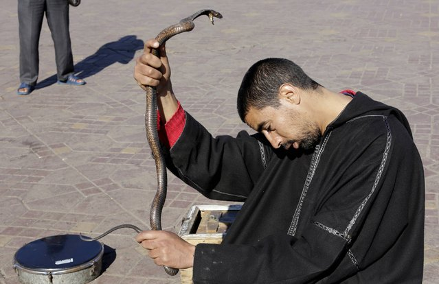 A snake charmer holds a snake in Djemaa El Fna square in Marrakesh's old city December 19, 2014. (Photo by Youssef Boudlal/Reuters)