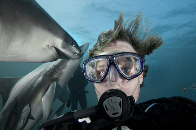 Aaron Gekoski took a dangerous selfie whilst diving with the sharks at Aliwal Shoal in South Africa. (Photo by Aaron Gekoski/Caters News Agency)