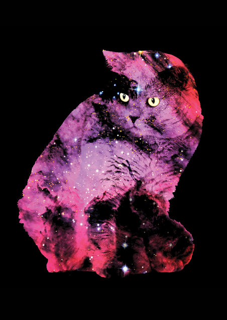 Space Cats By Zippora Lux
